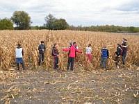 Kukorica törés